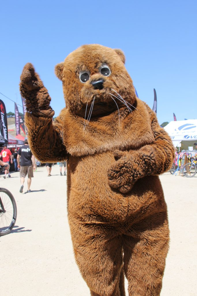OF COURSE SEA OTTER WOULD NOT BE COMPLETE WITHOUT SEEING THIS FURRY GUY.